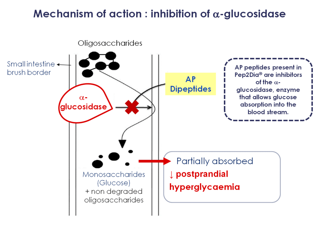 Mechanism of action : inhibition of a-glucosidase